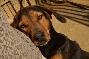 DASH Tierschutz Kalamata Hund Luigi