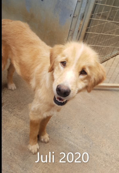 DASH Tierschutz Kalamata Hund Tito Update