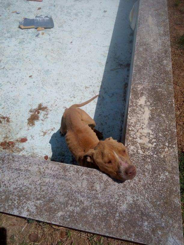 DASH Tierschutz Hund Messiah