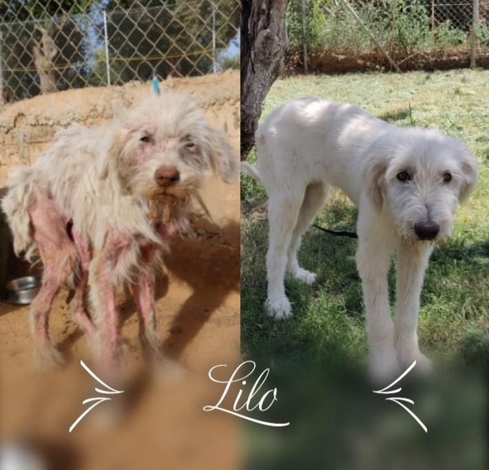DASH Tierschutz Hund Lilo Update