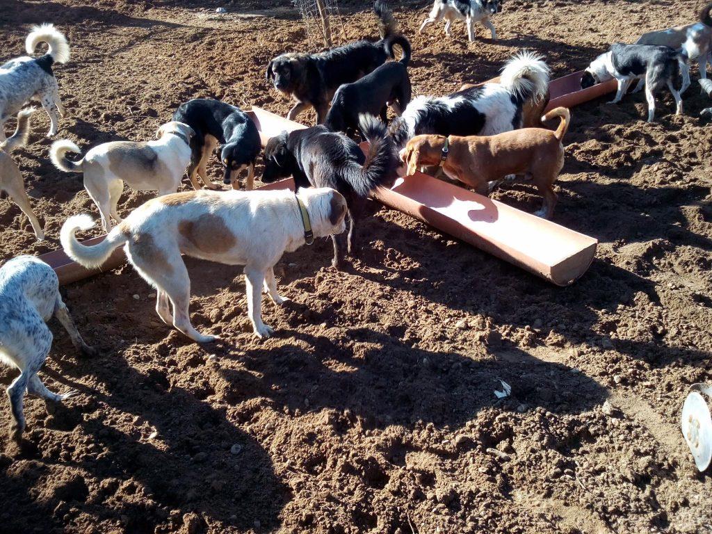 DASH Tierschutz Fütterung