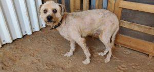 DASH Tierschutz Hund Leroy