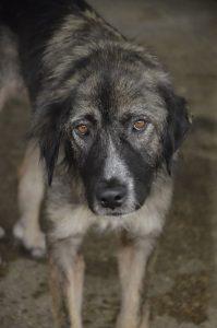 DASH Tierschutz Hund Gracie